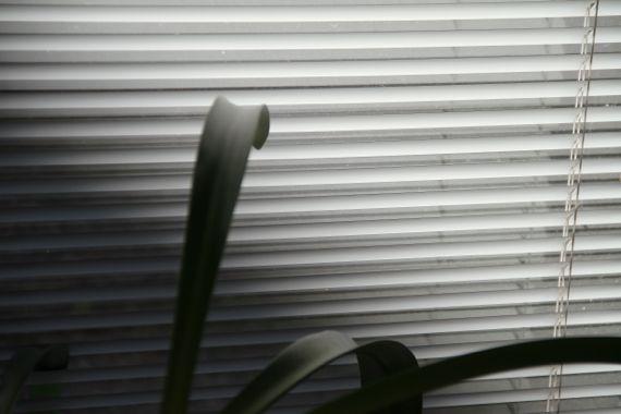 Sun blind plant