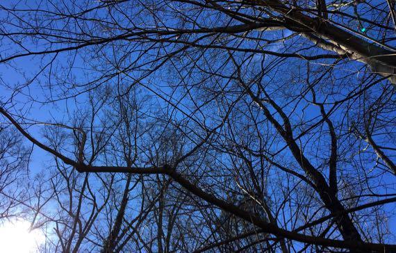 Sun tree view