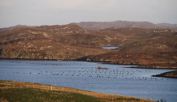 Sunsetish mussel farm