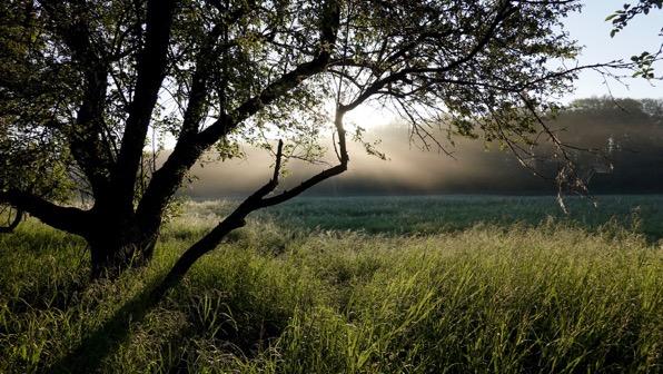 That morning light