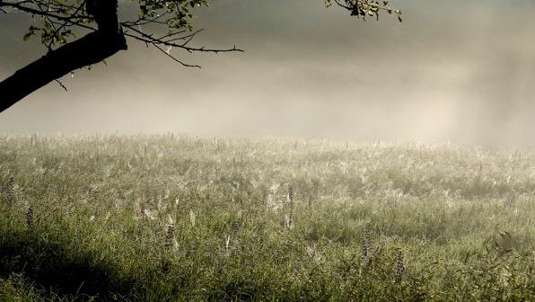 That morning mist