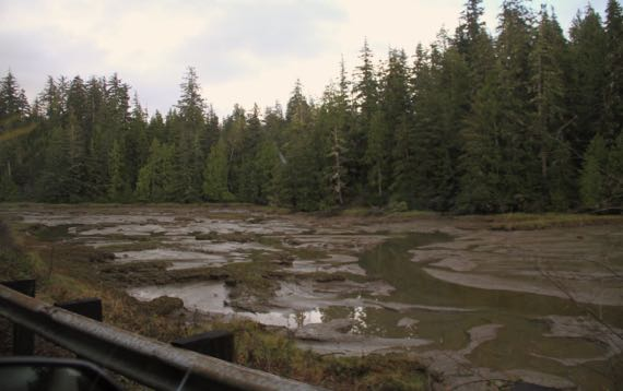 Tidal flat mud