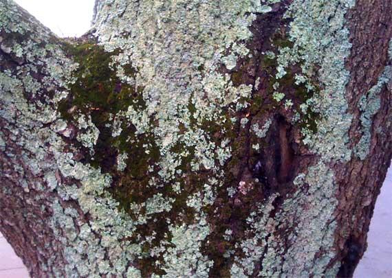 tree_lichen_moss.jpg