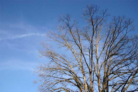 tree_sky_silhouette.jpg