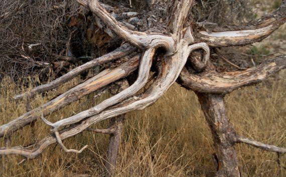 Tree bottom