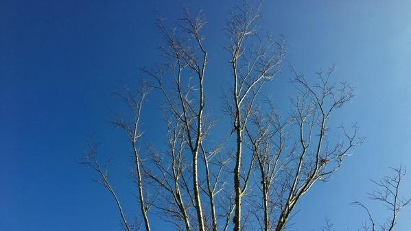 Tree branch etching