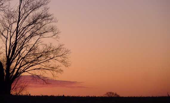 tree_in_mich_at_dawn.jpg