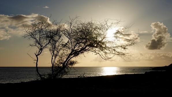 Tree low sun