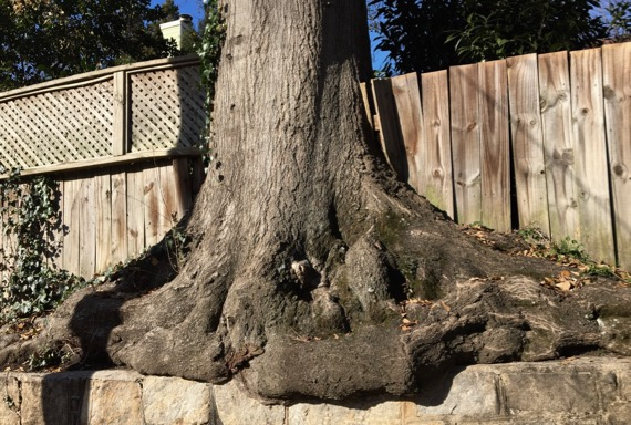 Tree outgrowing