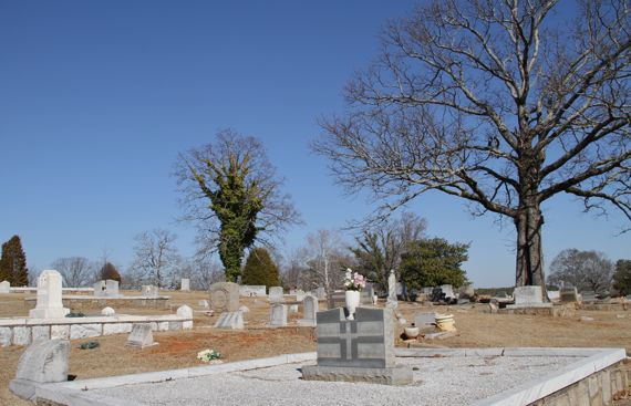 Tree reigning over south view cemetery