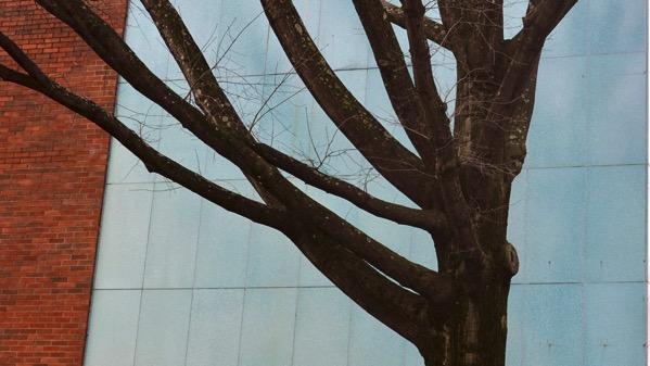 Tree turquoise