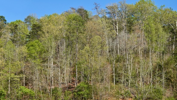 Trees leafing out mtns