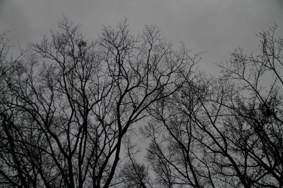 Treetops against dark cloud rain sky