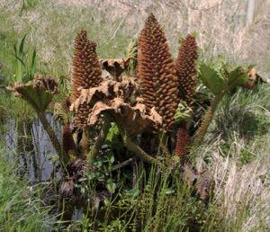 UnID plant