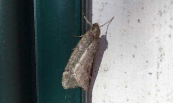 Unfocused moth