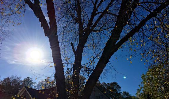 Urban birch silhouette