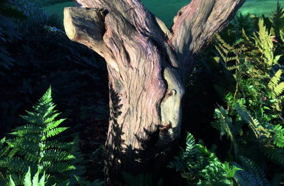 Urban gnarly trunk