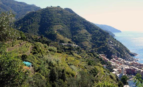 Vernazza terraced slopes