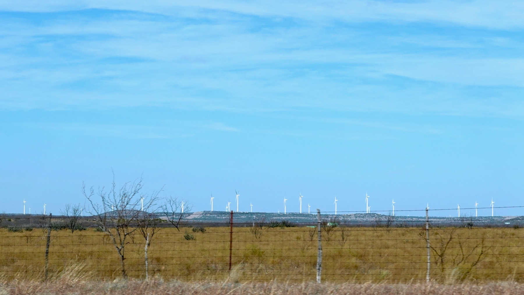 Windplants