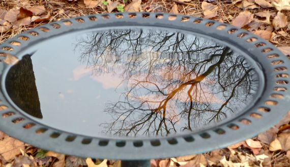 Wintery birdbath reflection