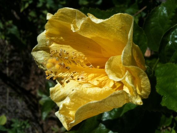 yellow_fall_flower.jpg