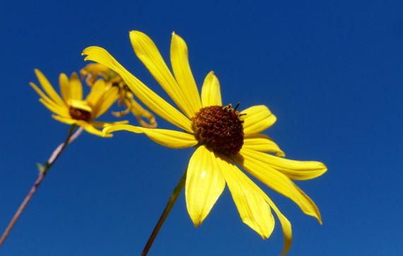 Yellow fleur against sky ABG