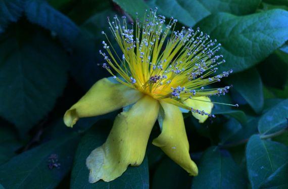 Yellow sparkle flower